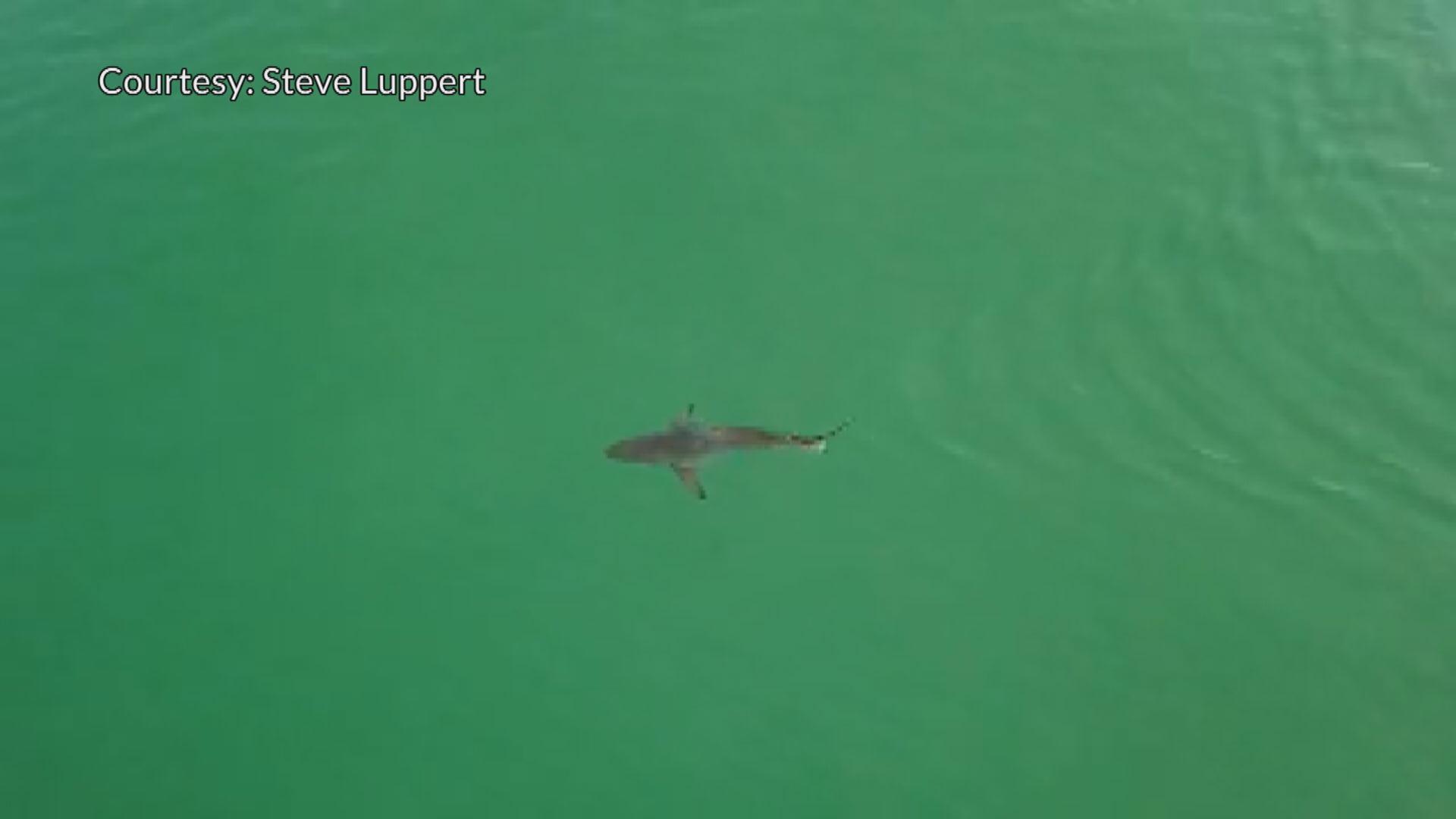Pensacola Sharks