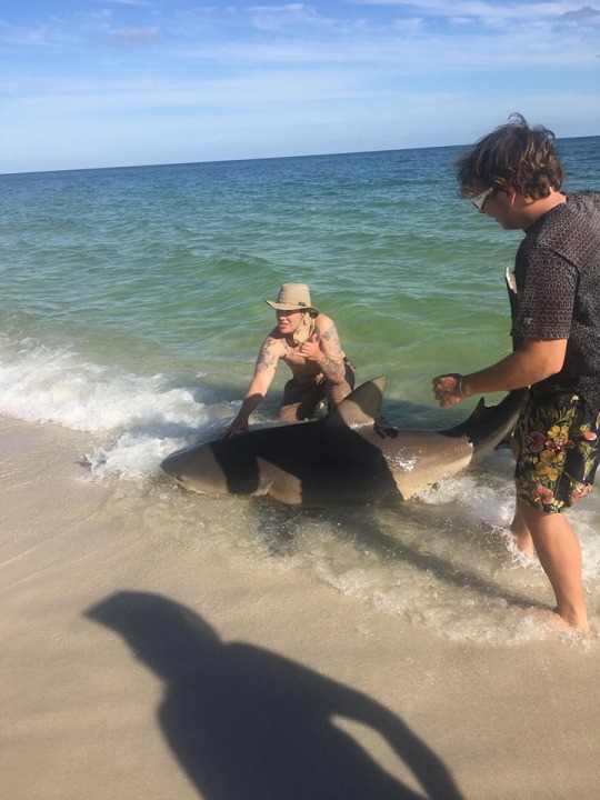 Wkrg Watch Fisherman Catch Large Shark On Navarre Beach