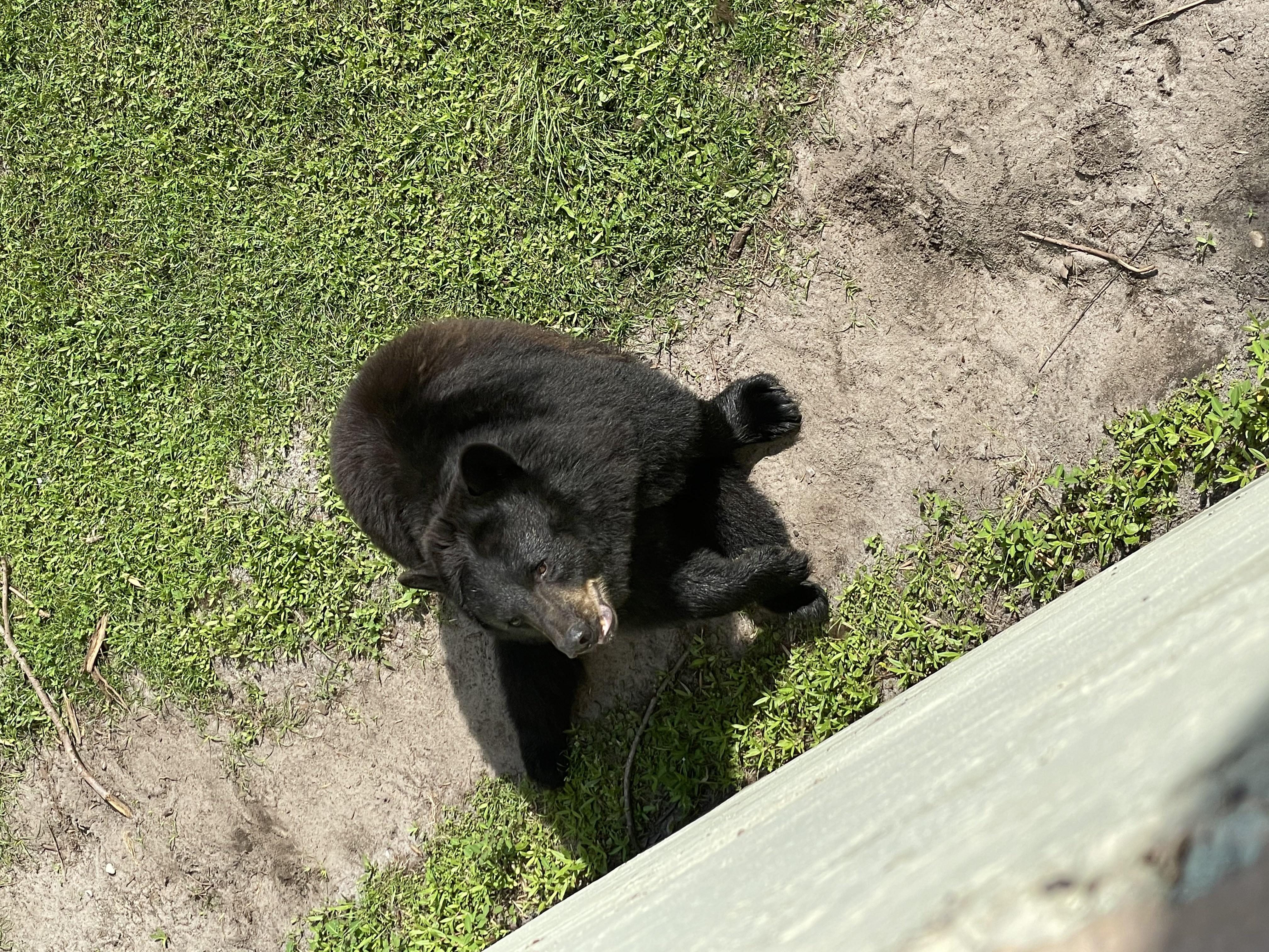 Destination Gulf Coast: Gulf Breeze Zoo