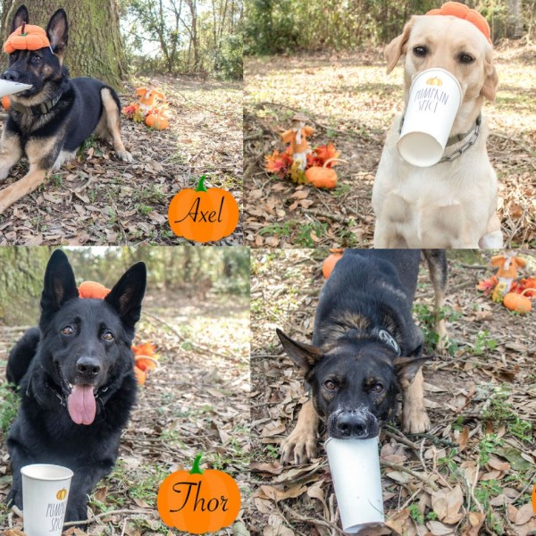 PUPkin Spice and everything nice in the Escambia County K9 department