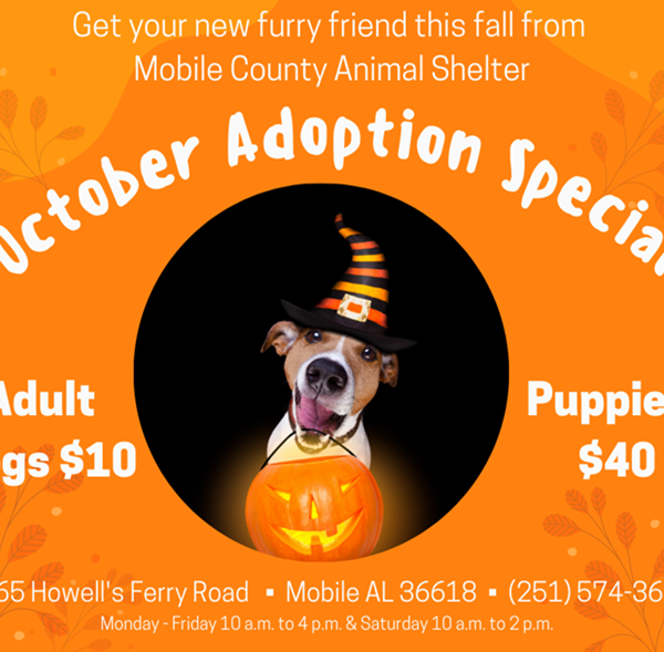 Mobile County Animal Shelter to host October Adoption Special